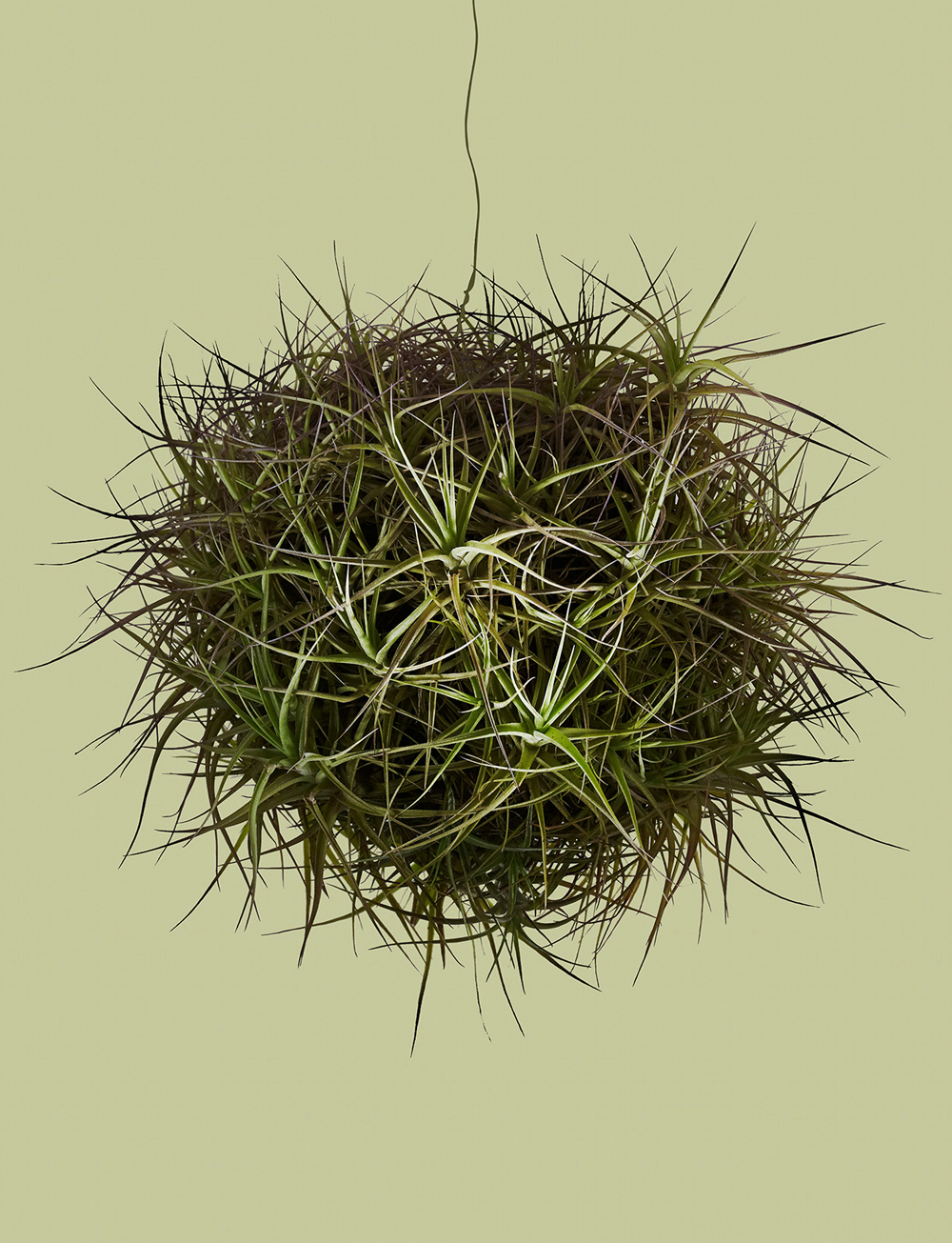 bde_airplant